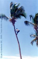 guan_dolio_decameron_beach_clug_cueilleur_ananas_01