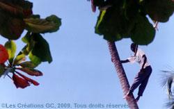 guan_dolio_decameron_beach_clug_cueilleur_ananas_02